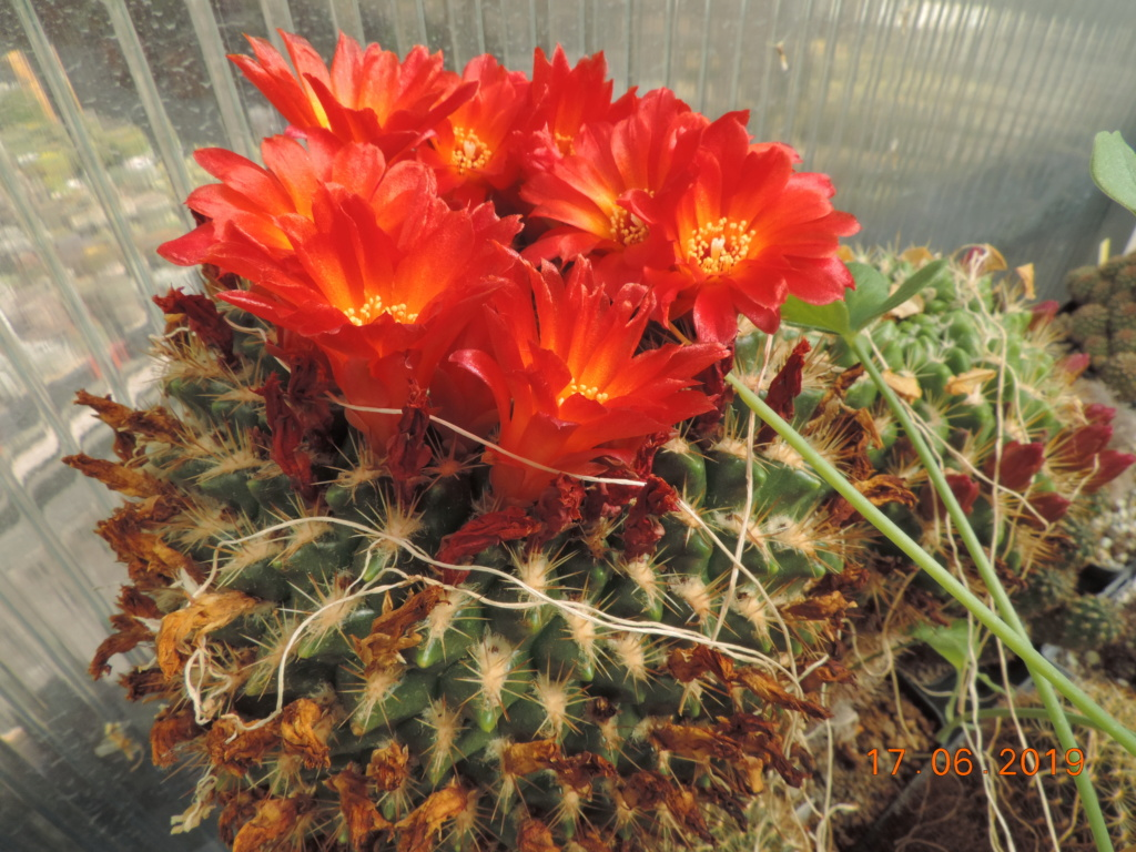 Cacti and Sukkulent in Köln, every day new flowers in the greenhouse Part 217 Bild3427
