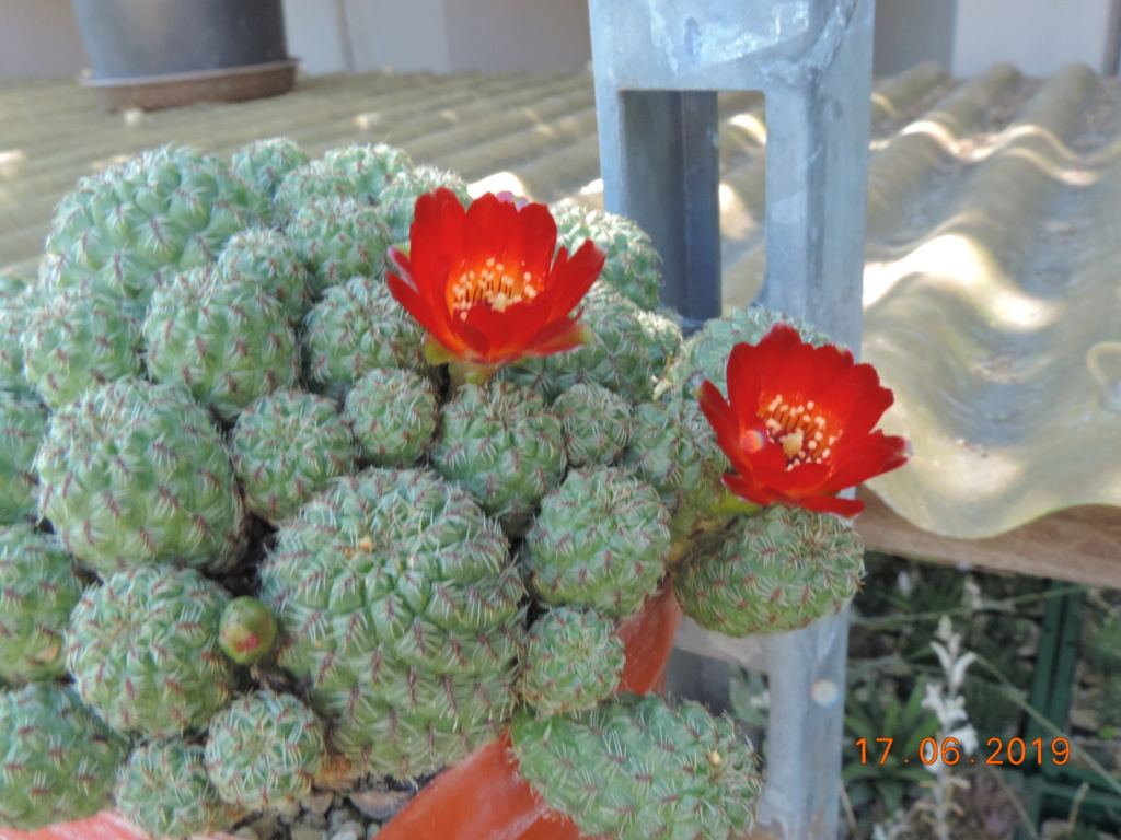 Cacti and Sukkulent in Köln, every day new flowers in the greenhouse Part 217 Bild3465
