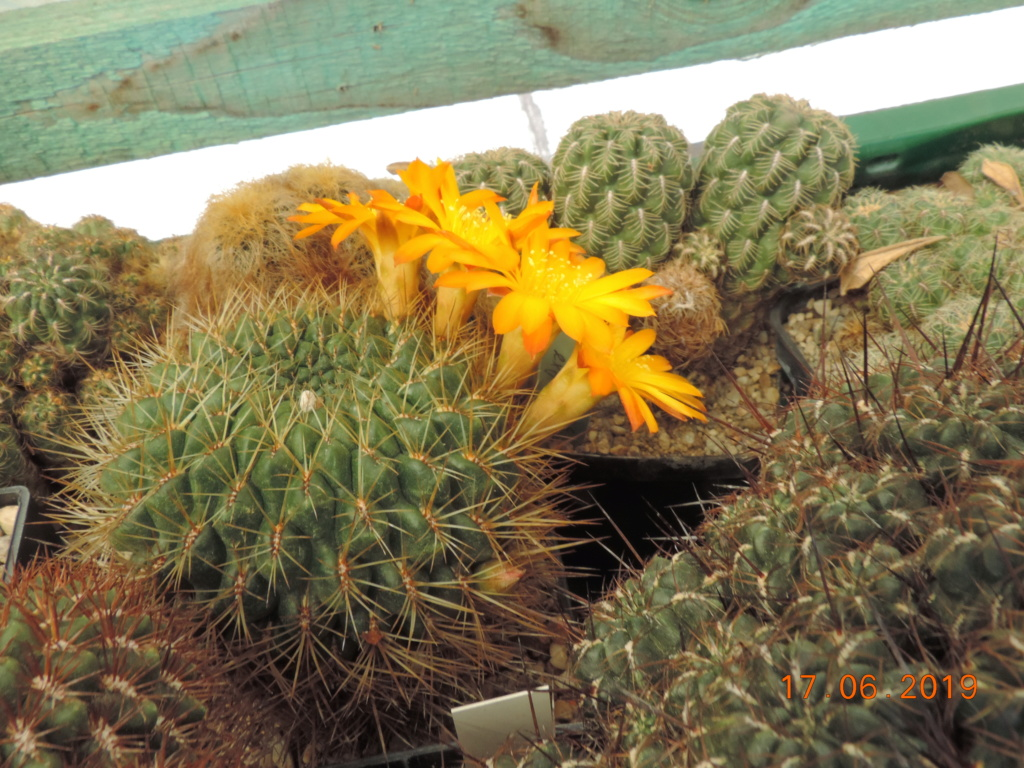 Cacti and Sukkulent in Köln, every day new flowers in the greenhouse Part 217 Bild3478