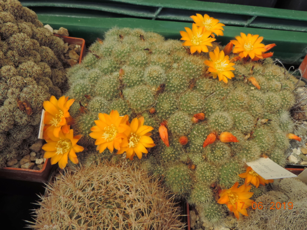 Cacti and Sukkulent in Köln, every day new flowers in the greenhouse Part 218 Bild3485