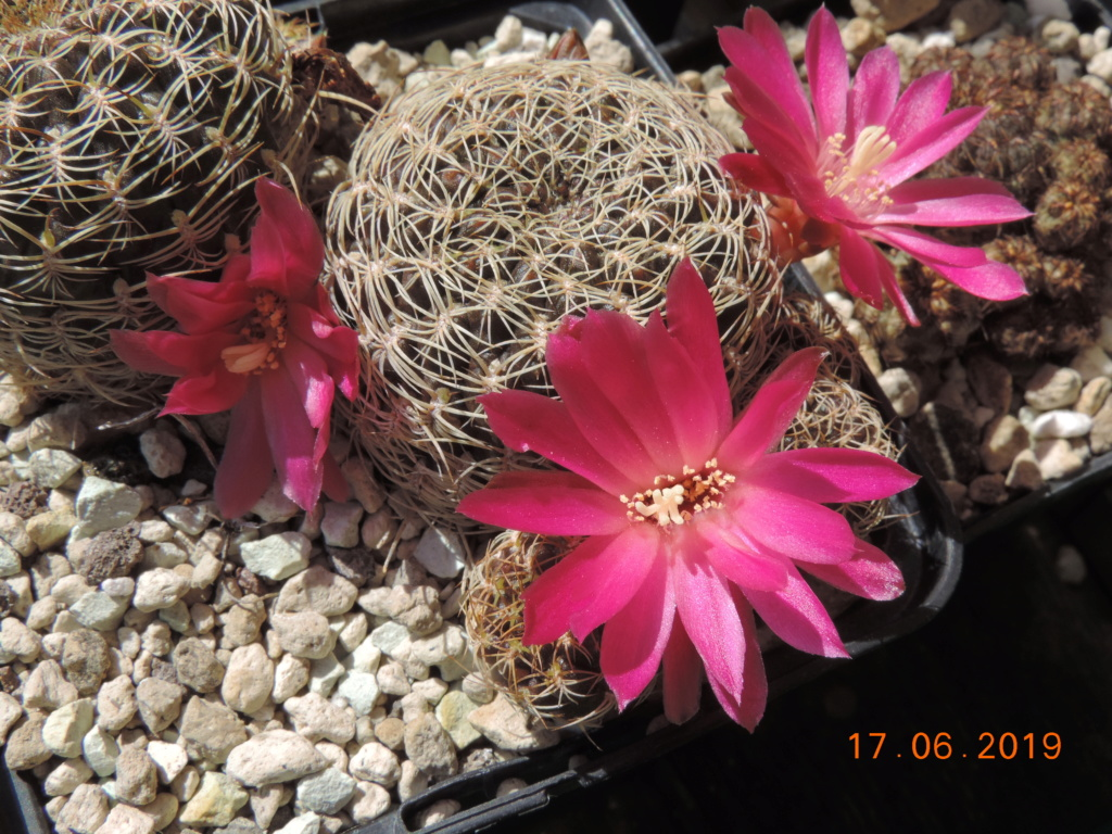 Cacti and Sukkulent in Köln, every day new flowers in the greenhouse Part 218 Bild3486