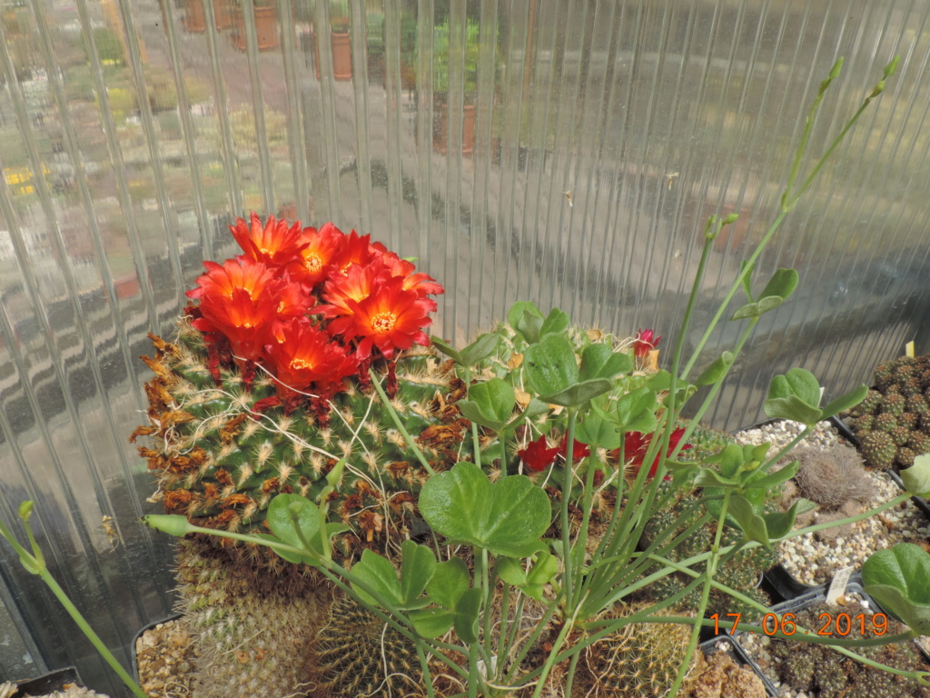 Cacti and Sukkulent in Köln, every day new flowers in the greenhouse Part 218 Bild3490