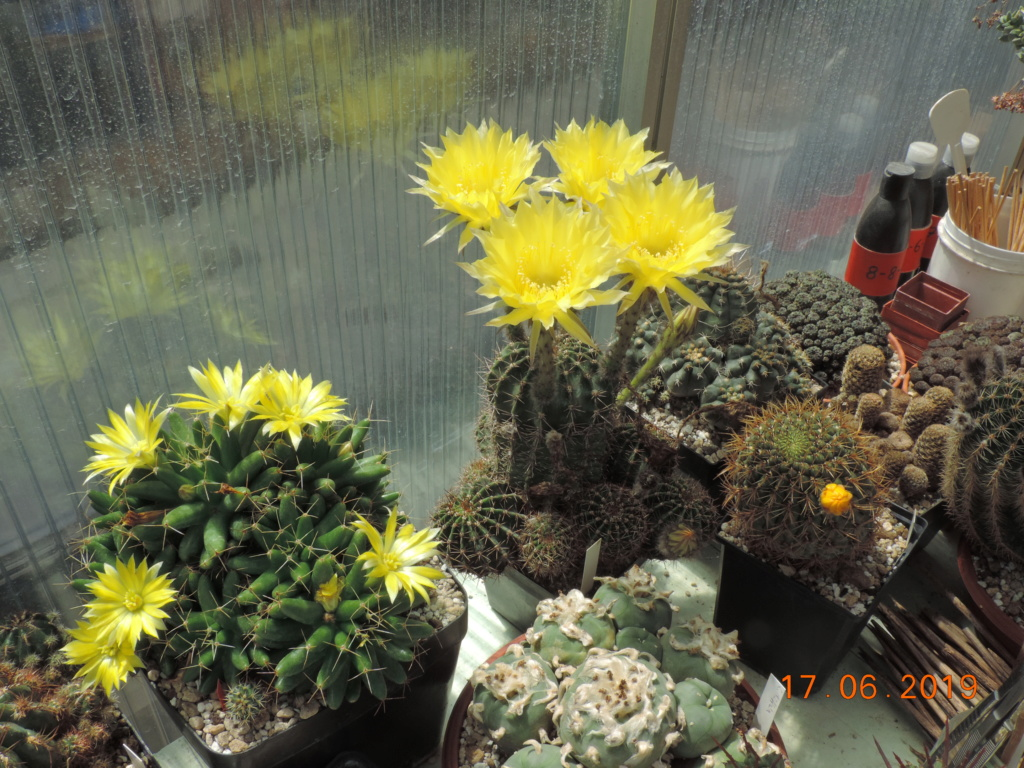 Cacti and Sukkulent in Köln, every day new flowers in the greenhouse Part 218 Bild3497