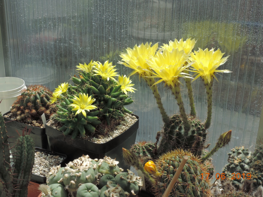 Cacti and Sukkulent in Köln, every day new flowers in the greenhouse Part 218 Bild3499