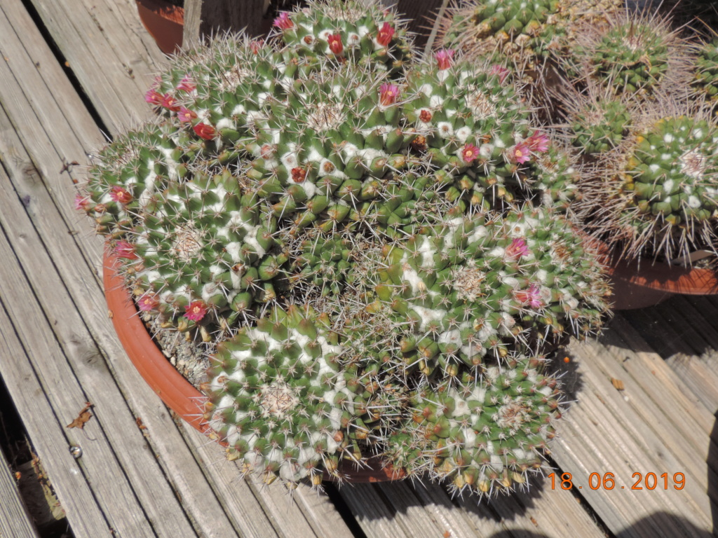 Cacti and Sukkulent in Köln, every day new flowers in the greenhouse Part 218 Bild3513
