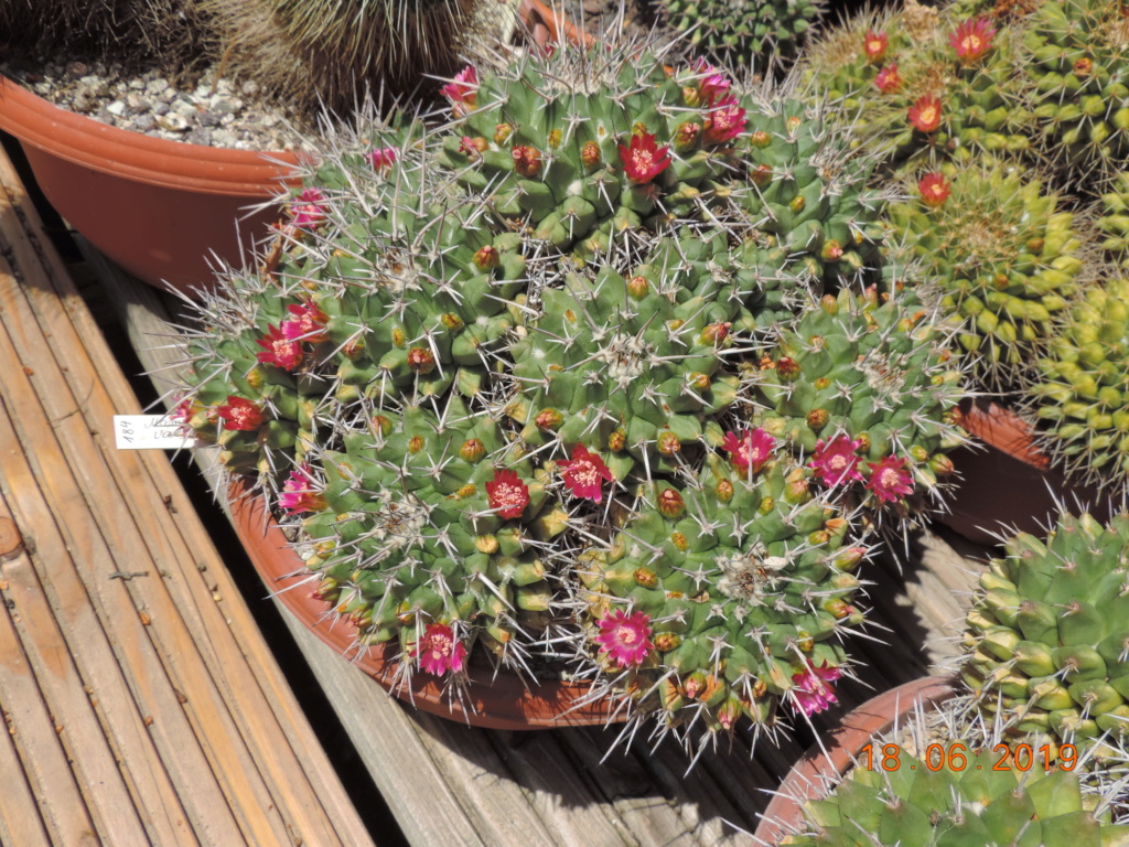 Cacti and Sukkulent in Köln, every day new flowers in the greenhouse Part 218 Bild3514