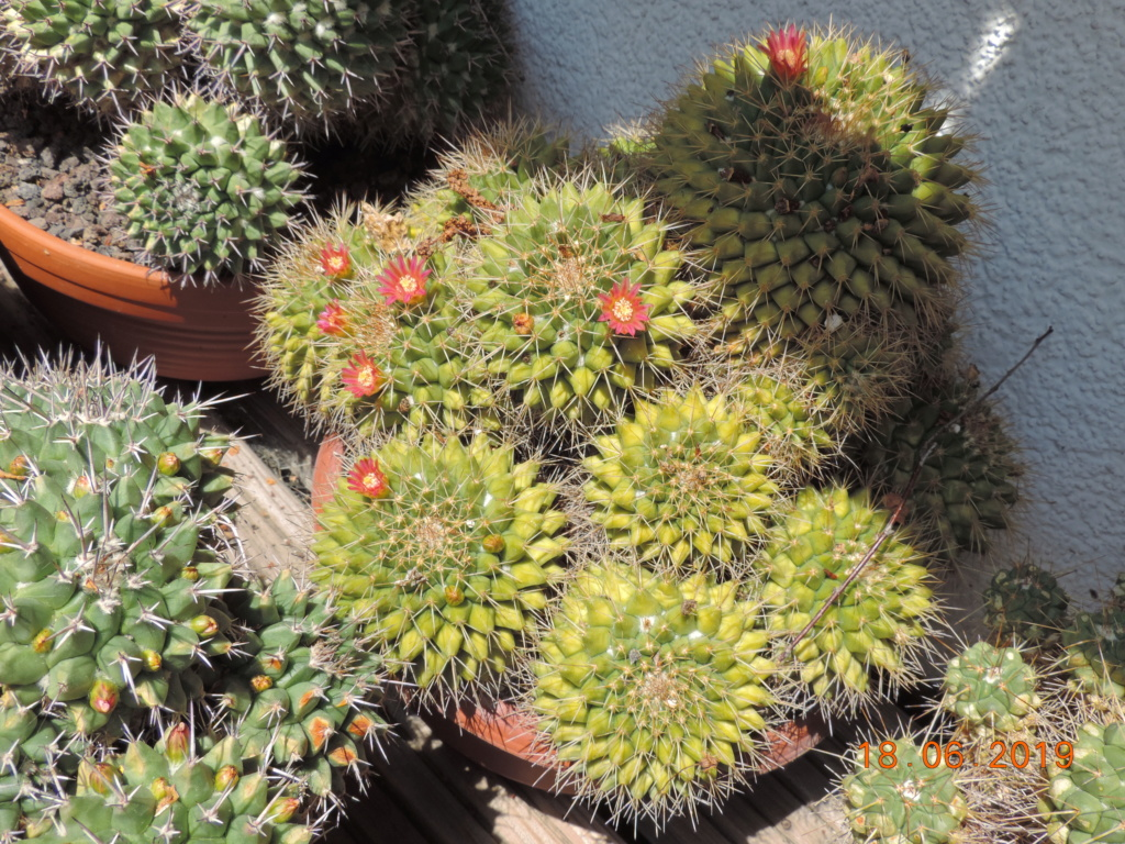 Cacti and Sukkulent in Köln, every day new flowers in the greenhouse Part 218 Bild3516