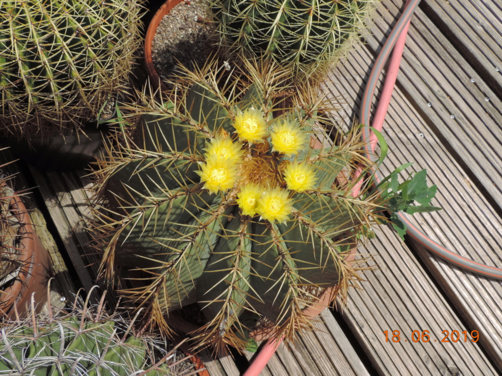 Cacti and Sukkulent in Köln, every day new flowers in the greenhouse Part 218 Bild3517