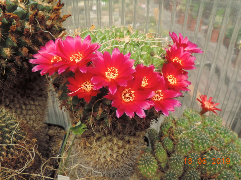 Cacti and Sukkulent in Köln, every day new flowers in the greenhouse Part 218 Bild3525