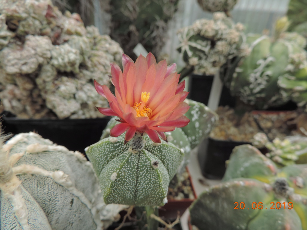 Cacti and Sukkulent in Köln, every day new flowers in the greenhouse Part 218 Bild3537