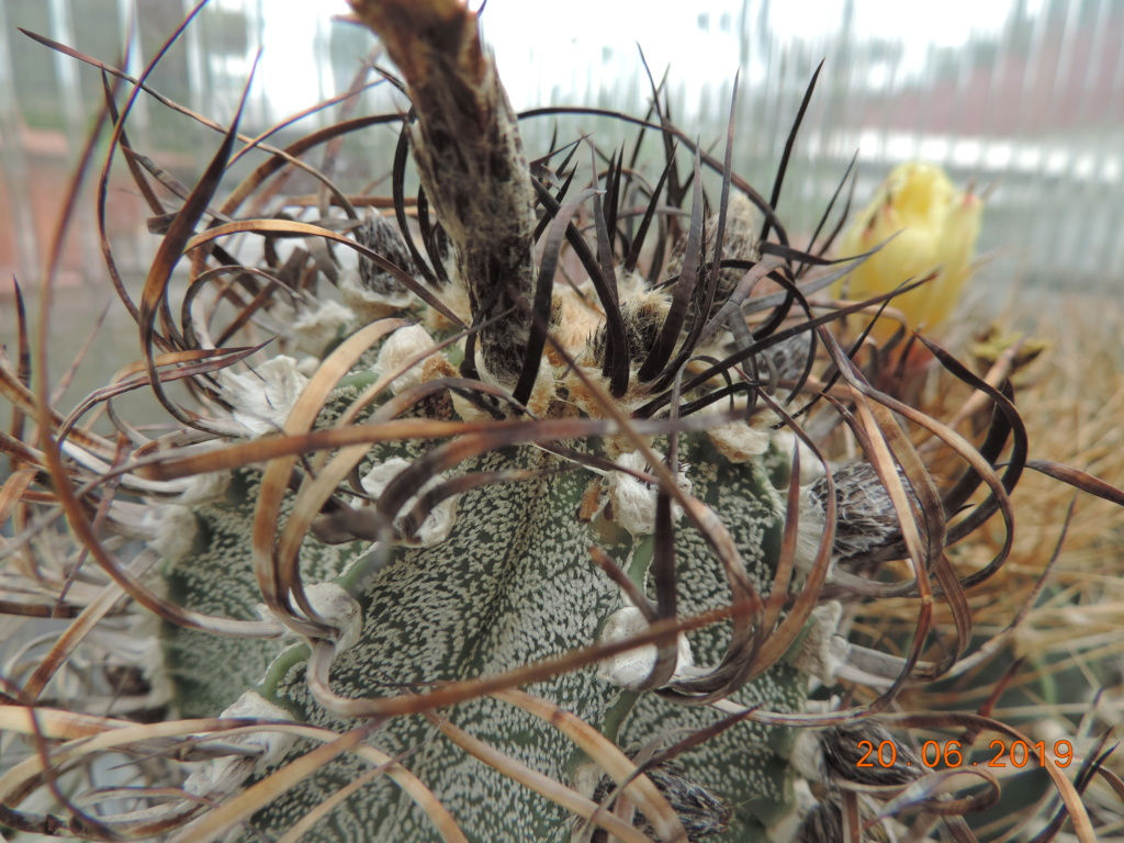 Cacti and Sukkulent in Köln, every day new flowers in the greenhouse Part 218 Bild3544