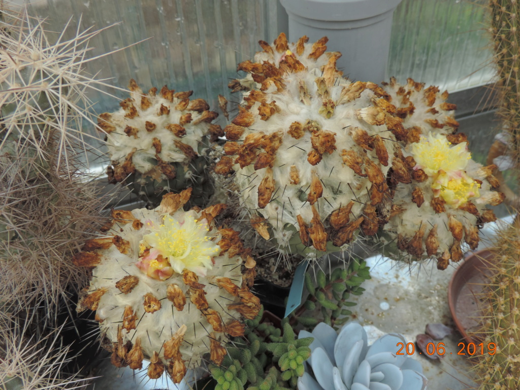 Cacti and Sukkulent in Köln, every day new flowers in the greenhouse Part 218 Bild3562