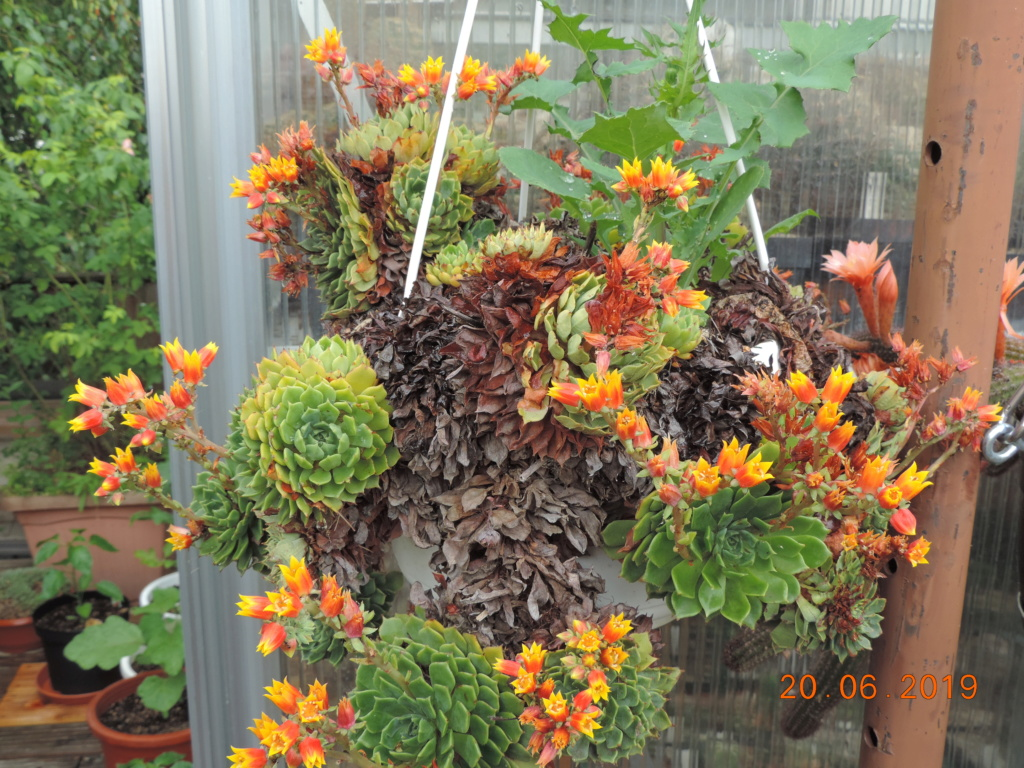 Cacti and Sukkulent in Köln, every day new flowers in the greenhouse Part 218 Bild3564