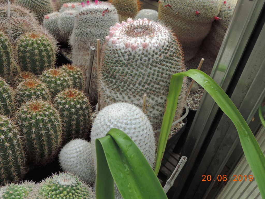 Cacti and Sukkulent in Köln, every day new flowers in the greenhouse Part 218 Bild3567