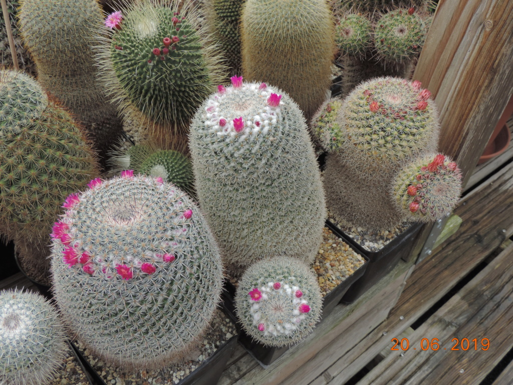 Cacti and Sukkulent in Köln, every day new flowers in the greenhouse Part 218 Bild3568