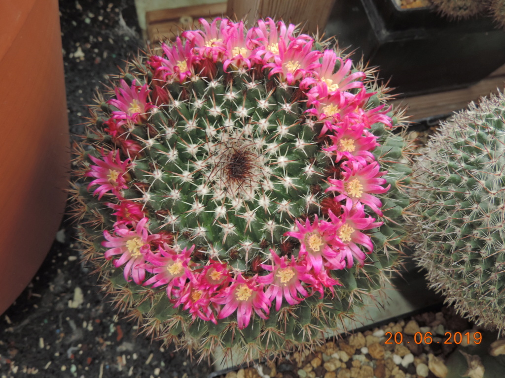 Cacti and Sukkulent in Köln, every day new flowers in the greenhouse Part 218 Bild3574