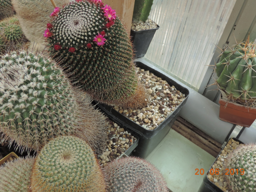 Cacti and Sukkulent in Köln, every day new flowers in the greenhouse Part 218 Bild3578