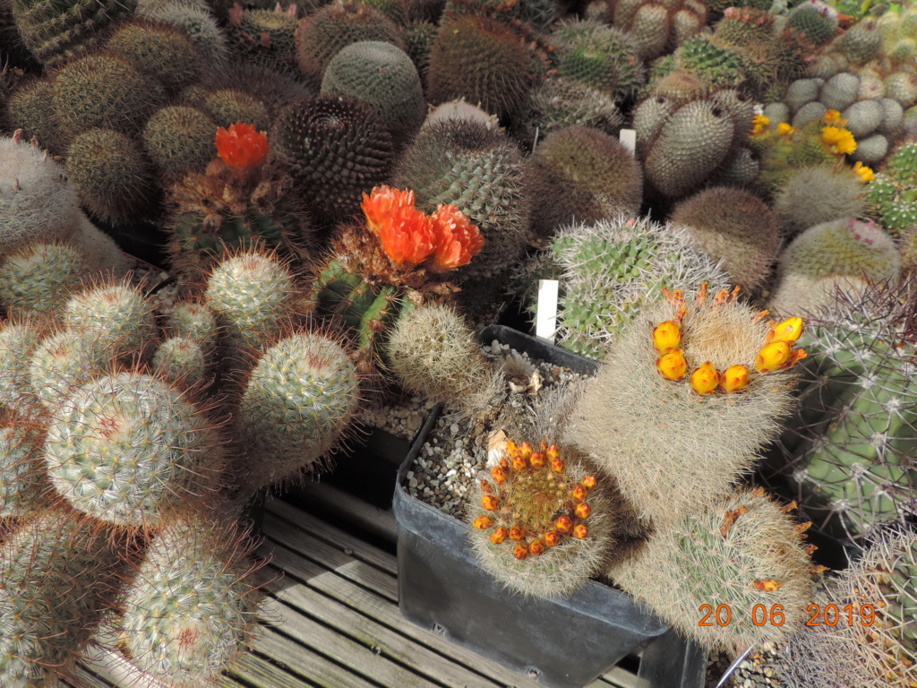 Cacti and Sukkulent in Köln, every day new flowers in the greenhouse Part 218 Bild3582