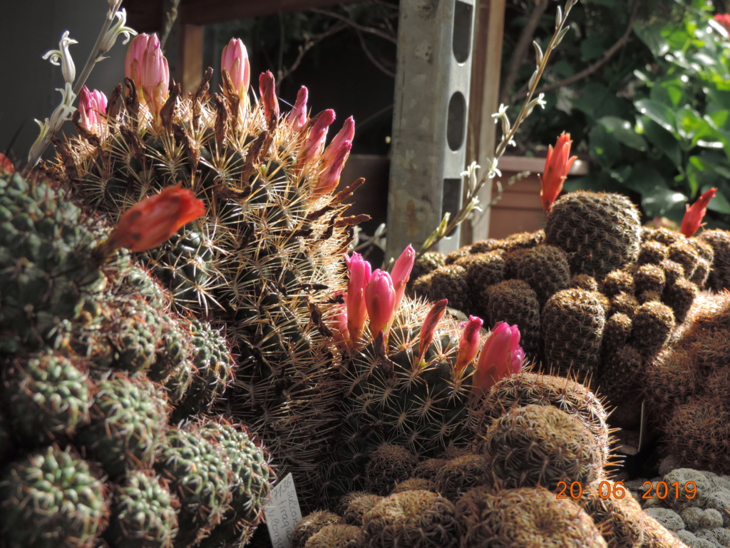 Cacti and Sukkulent in Köln, every day new flowers in the greenhouse Part 218 Bild3600