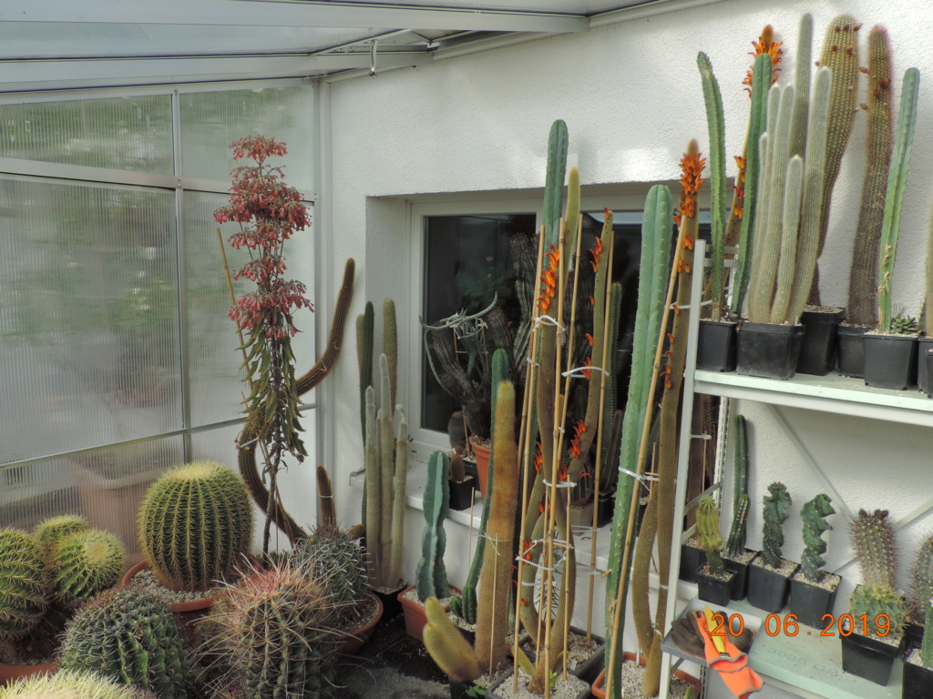 Cacti and Sukkulent in Köln, every day new flowers in the greenhouse Part 218 Bild3601