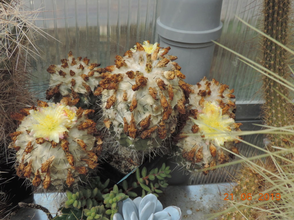 Cacti and Sukkulent in Köln, every day new flowers in the greenhouse Part 219 Bild3622