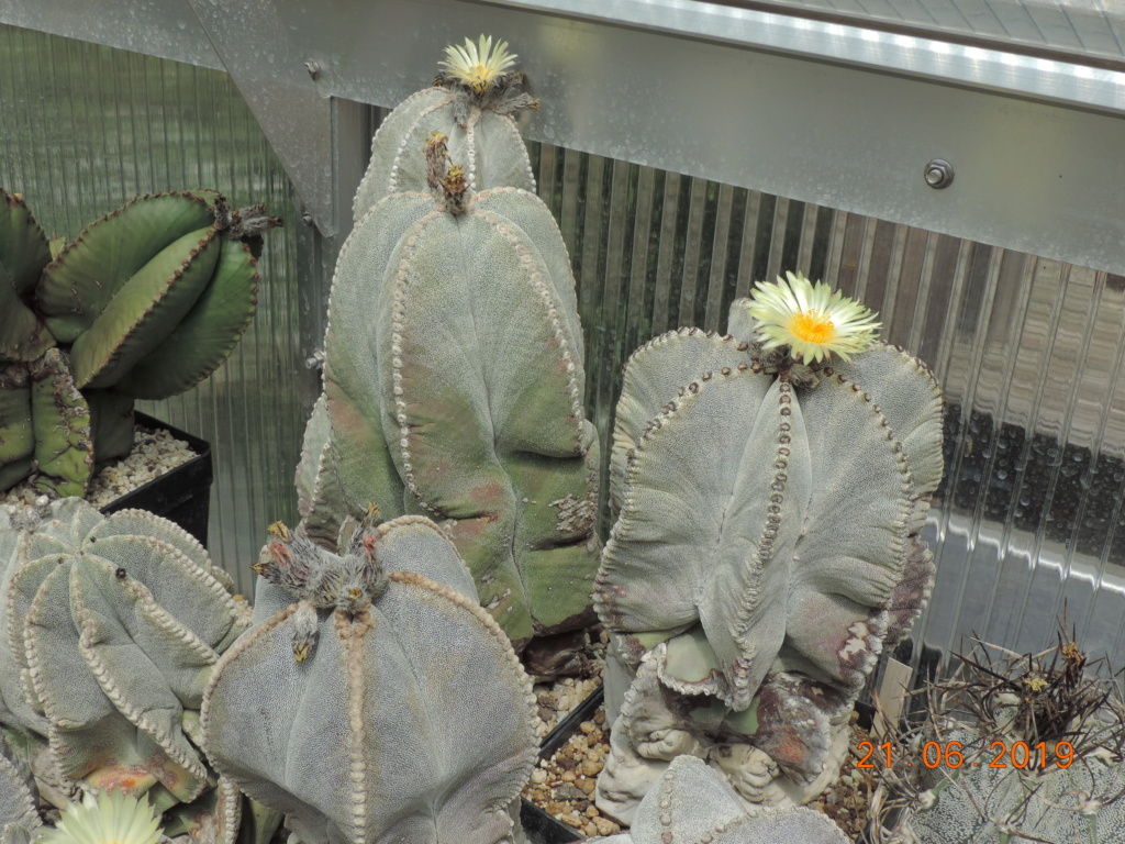 Cacti and Sukkulent in Köln, every day new flowers in the greenhouse Part 219 Bild3628