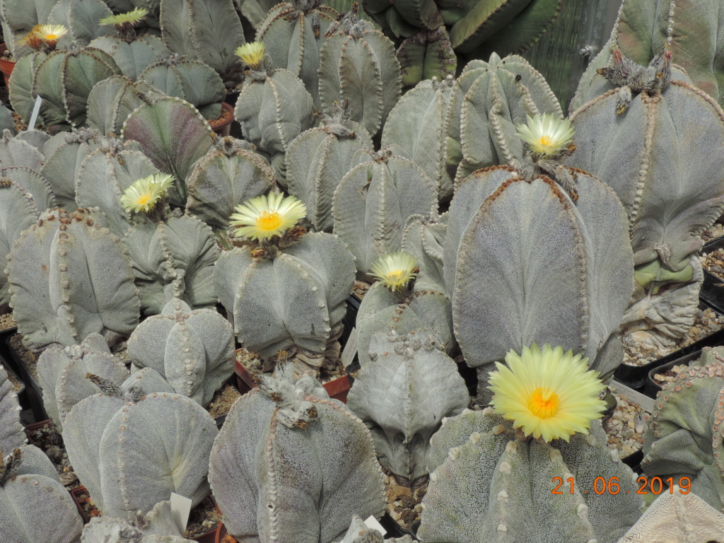 Cacti and Sukkulent in Köln, every day new flowers in the greenhouse Part 219 Bild3629