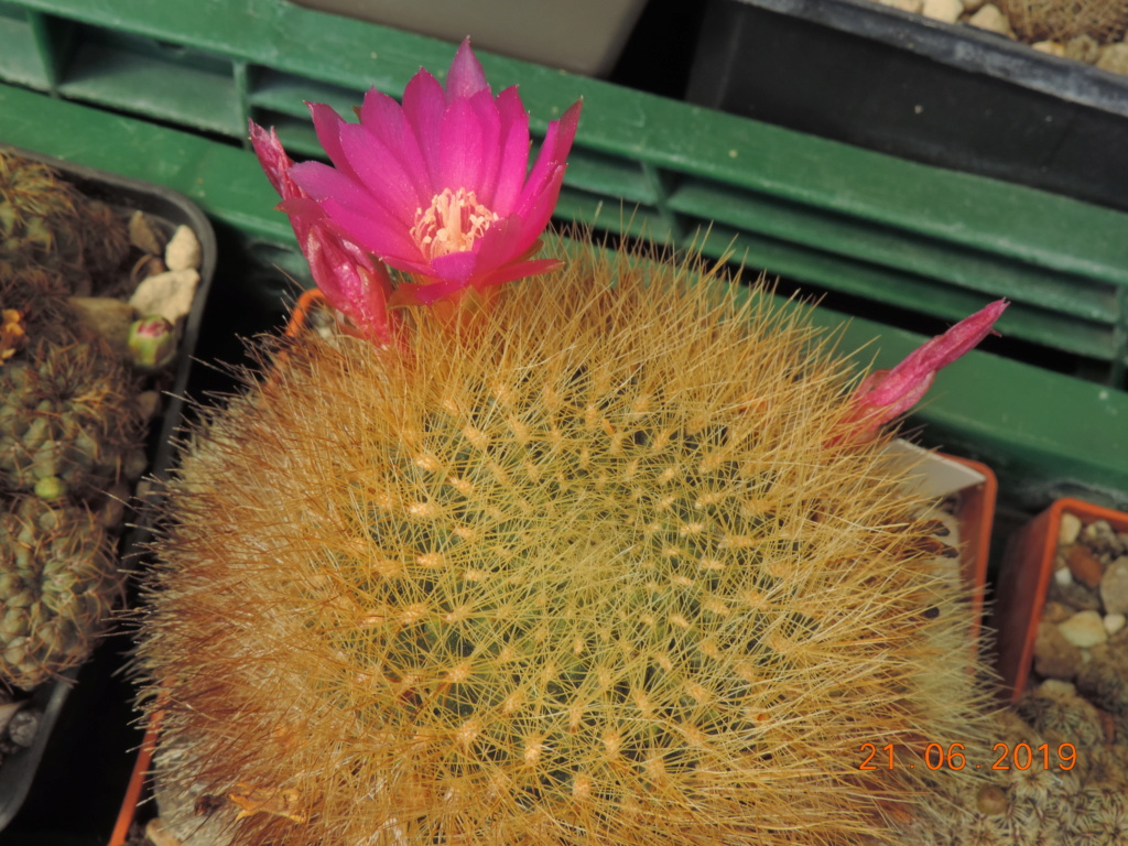 Cacti and Sukkulent in Köln, every day new flowers in the greenhouse Part 219 Bild3633