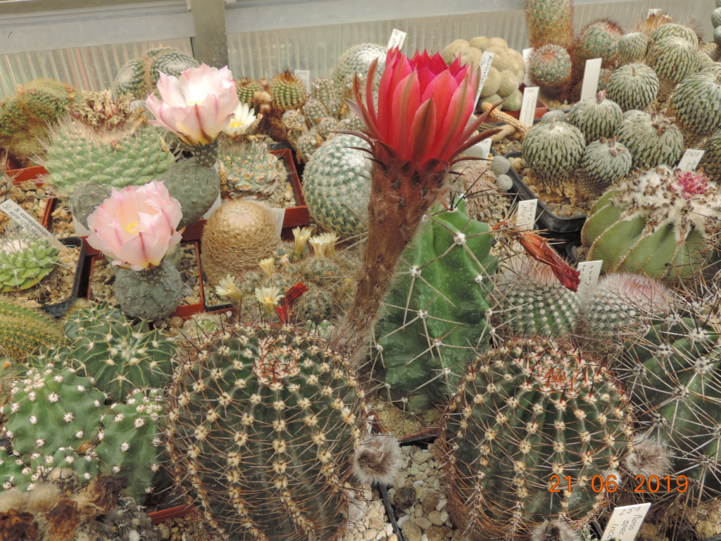 Cacti and Sukkulent in Köln, every day new flowers in the greenhouse Part 219 Bild3685