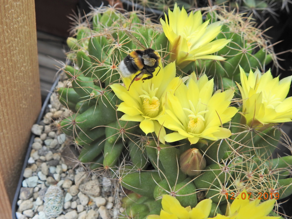 Cacti and Sukkulent in Köln, every day new flowers in the greenhouse Part 219 Bild3696
