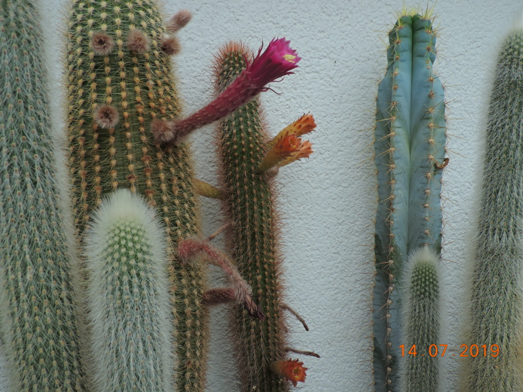 Cacti and Sukkulent in Köln, every day new flowers in the greenhouse Part 219 Bild3713