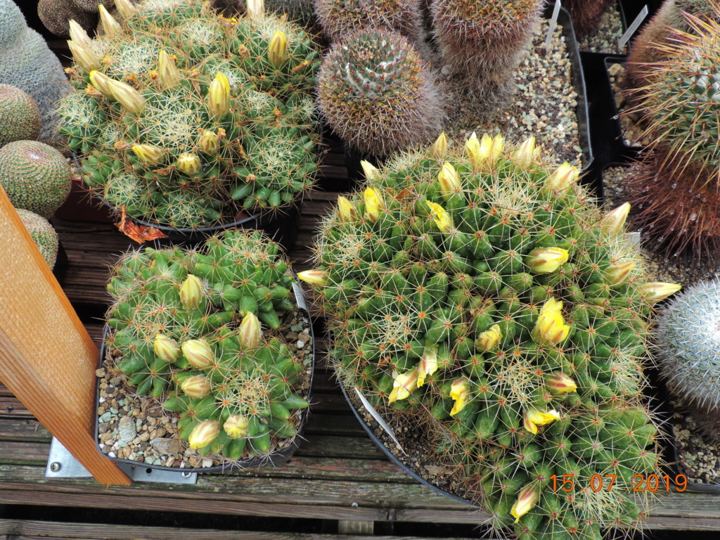 Cacti and Sukkulent in Köln, every day new flowers in the greenhouse Part 219 Bild3726
