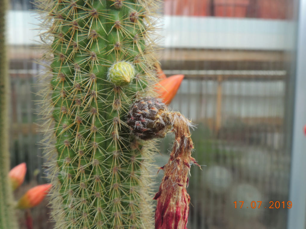 Cacti and Sukkulent in Köln, every day new flowers in the greenhouse Part 220 Bild3754