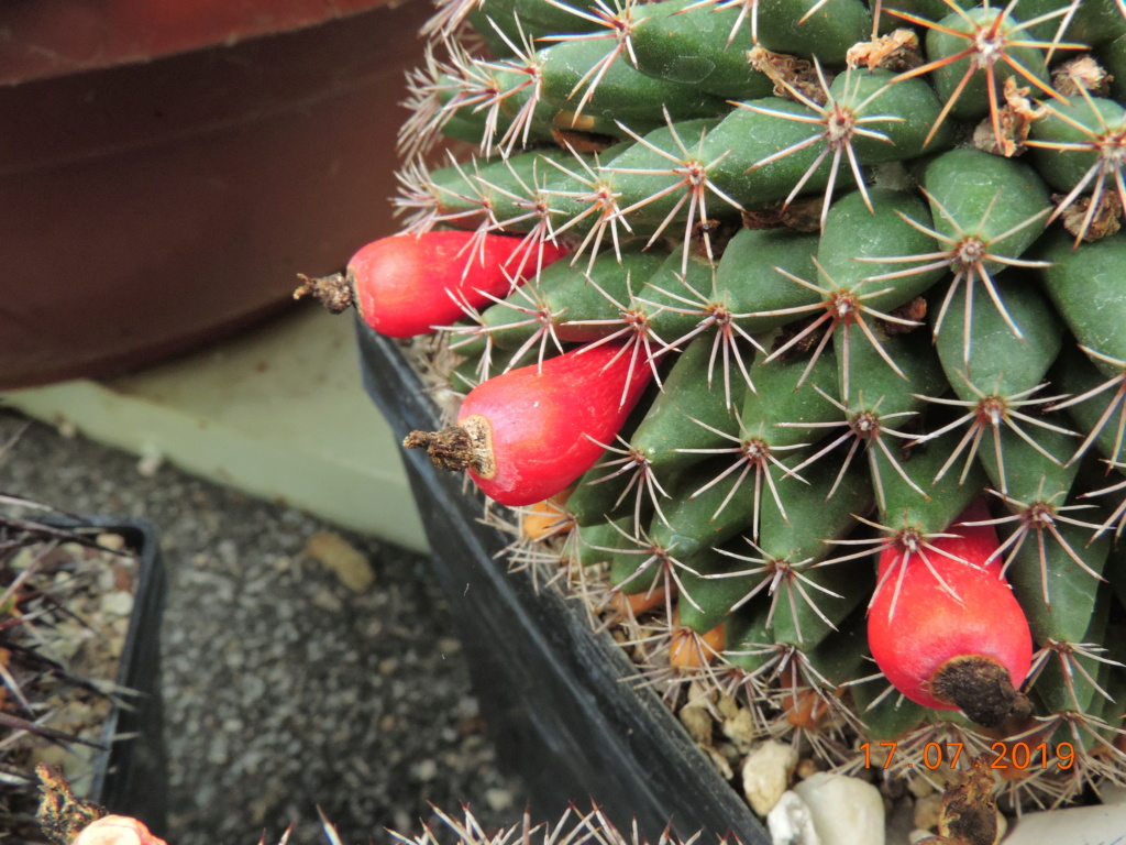 Cacti and Sukkulent in Köln, every day new flowers in the greenhouse Part 220 Bild3758
