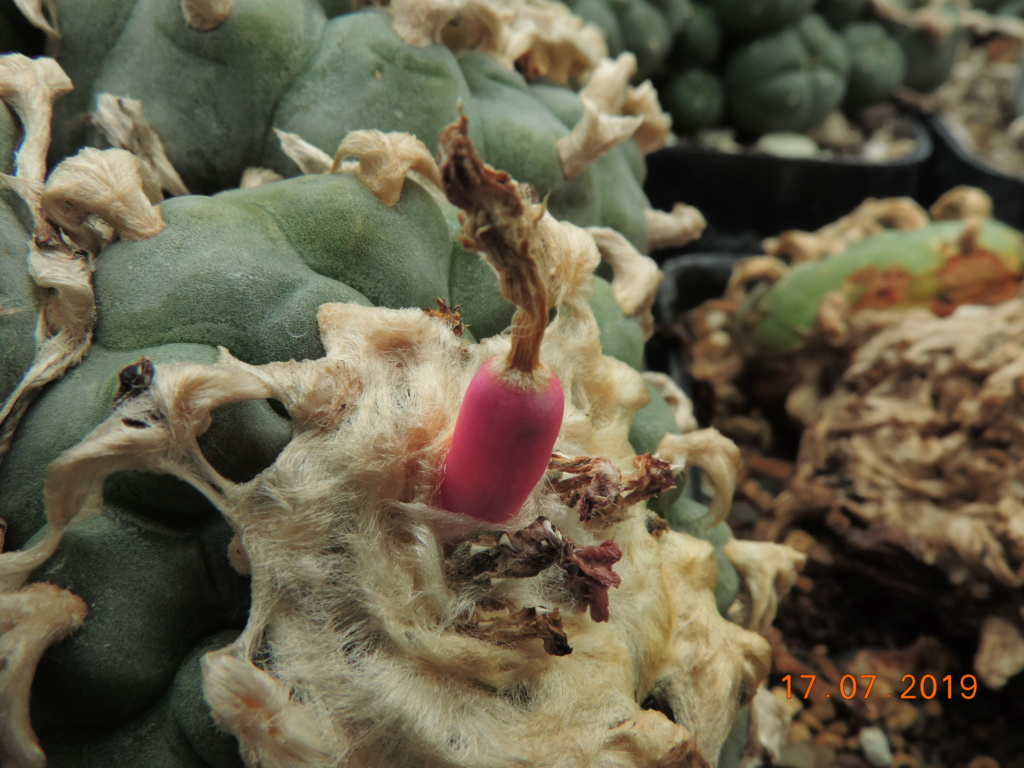 Cacti and Sukkulent in Köln, every day new flowers in the greenhouse Part 220 Bild3767