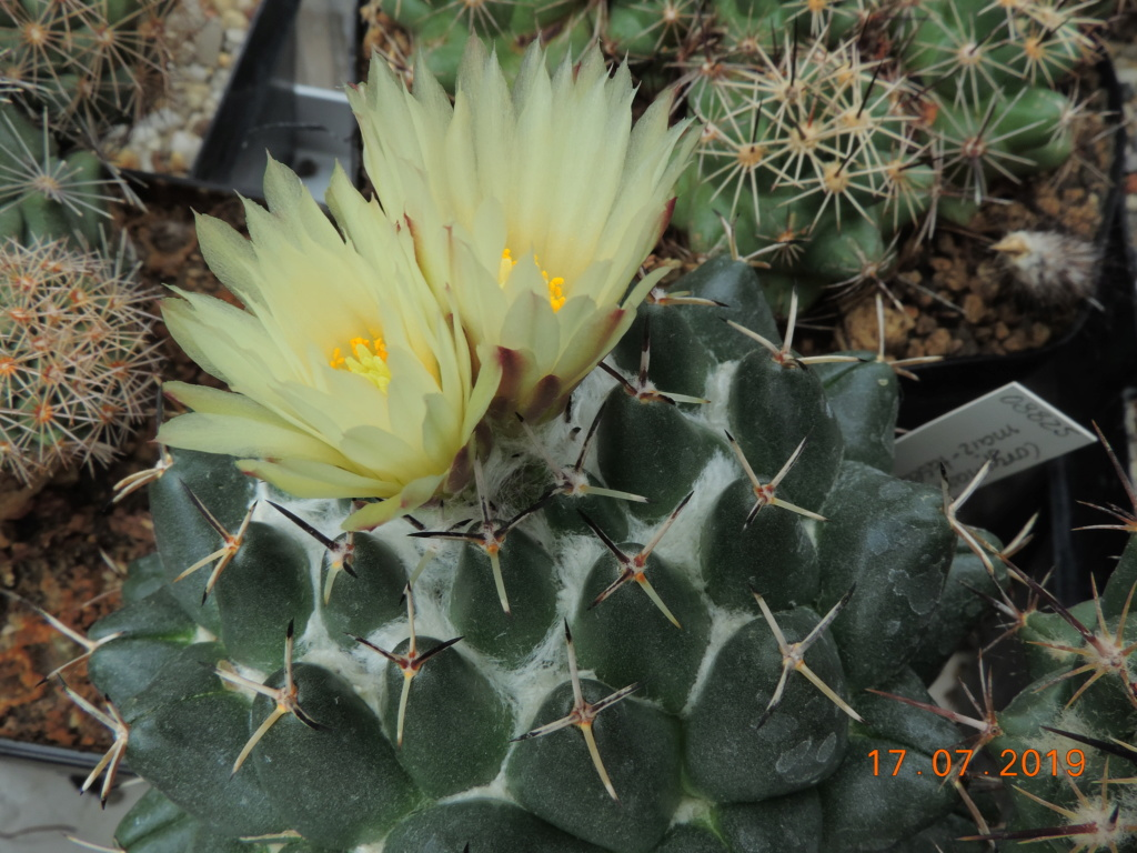 Cacti and Sukkulent in Köln, every day new flowers in the greenhouse Part 220 Bild3777