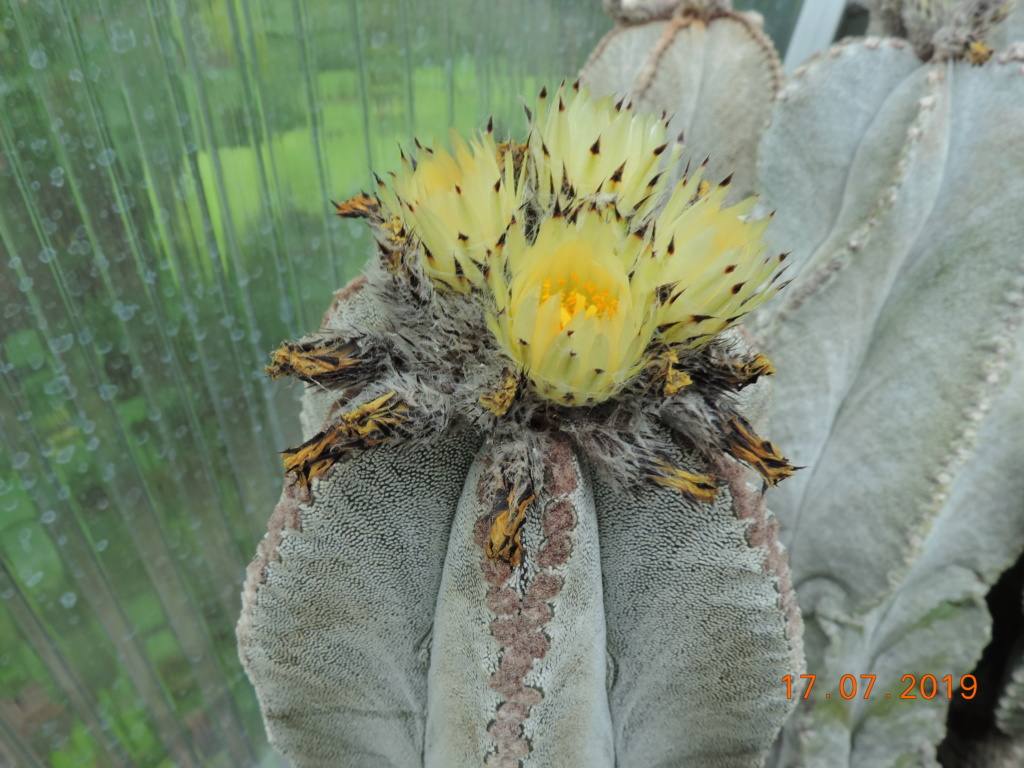 Cacti and Sukkulent in Köln, every day new flowers in the greenhouse Part 220 Bild3794