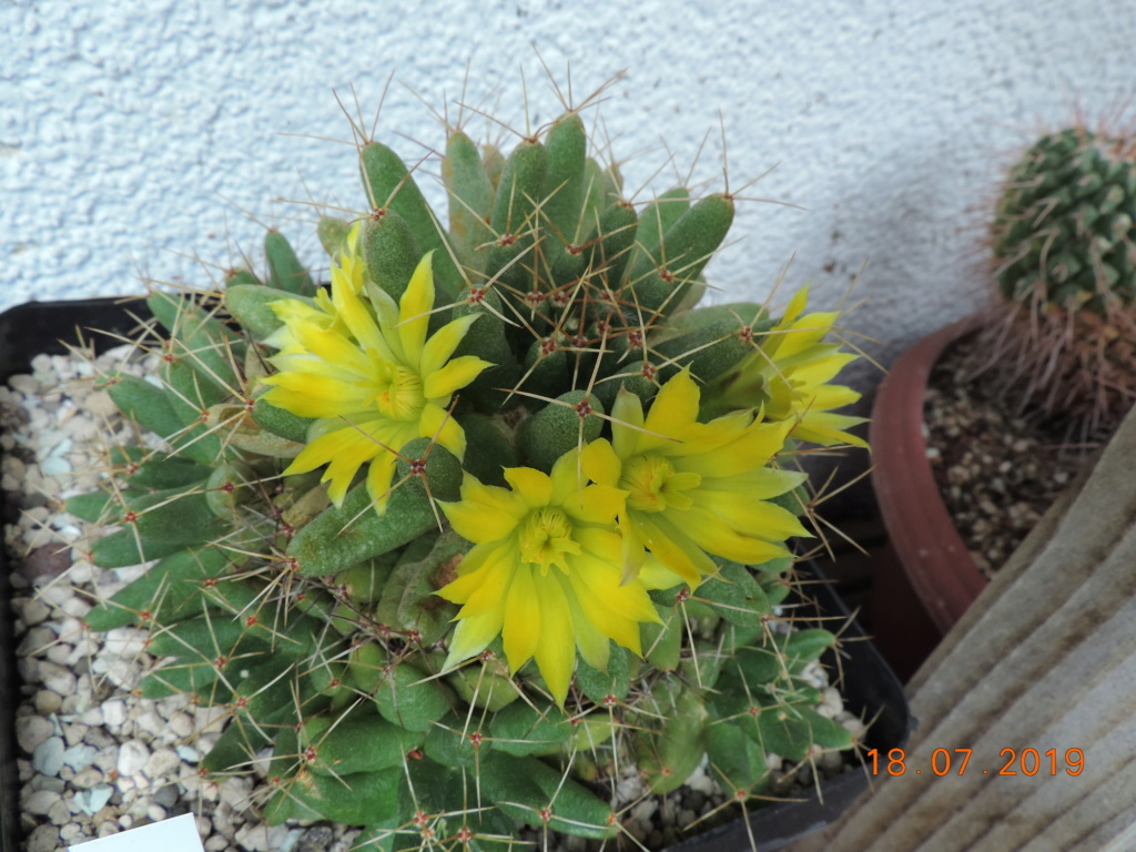 Cacti and Sukkulent in Köln, every day new flowers in the greenhouse Part 220 Bild3798