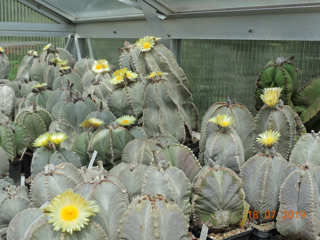 Cacti and Sukkulent in Köln, every day new flowers in the greenhouse Part 220 Bild3801