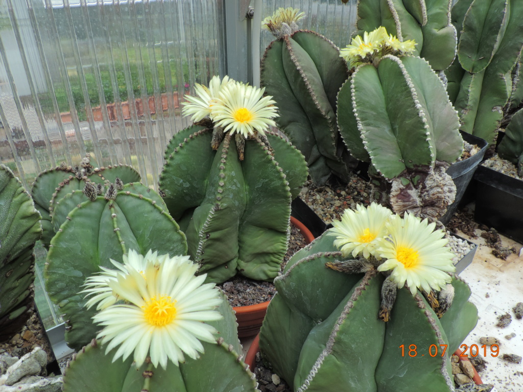 Cacti and Sukkulent in Köln, every day new flowers in the greenhouse Part 220 Bild3803