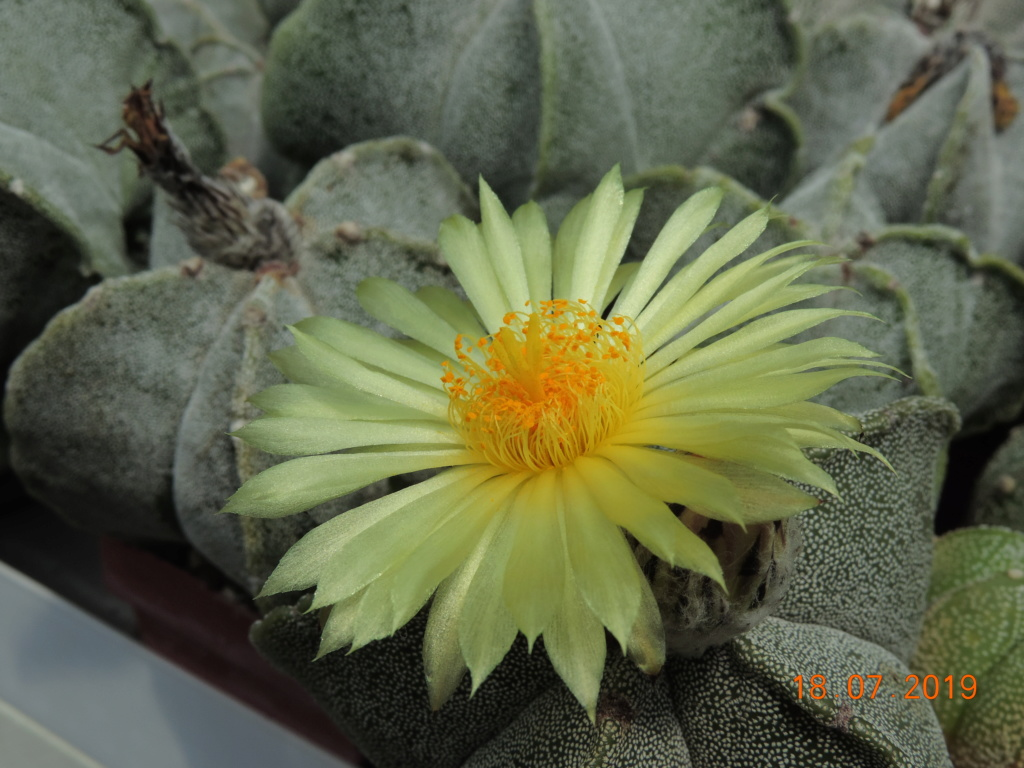 Cacti and Sukkulent in Köln, every day new flowers in the greenhouse Part 220 Bild3804