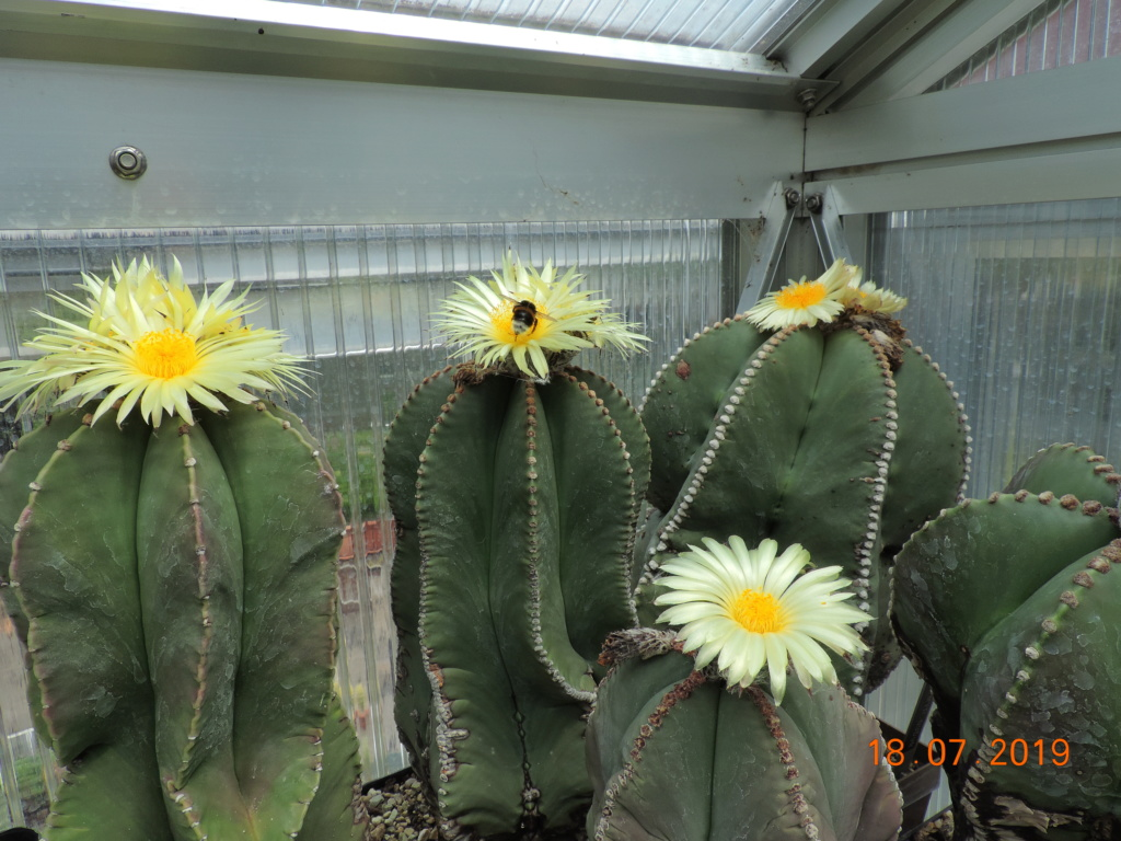 Cacti and Sukkulent in Köln, every day new flowers in the greenhouse Part 220 Bild3805