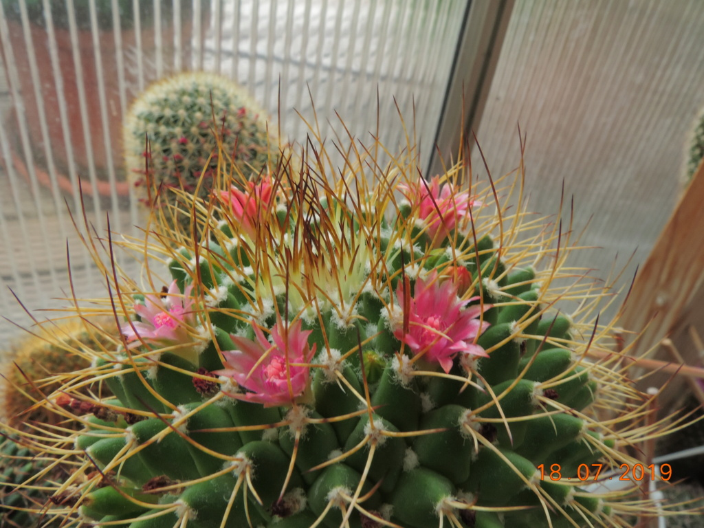 Cacti and Sukkulent in Köln, every day new flowers in the greenhouse Part 220 Bild3820