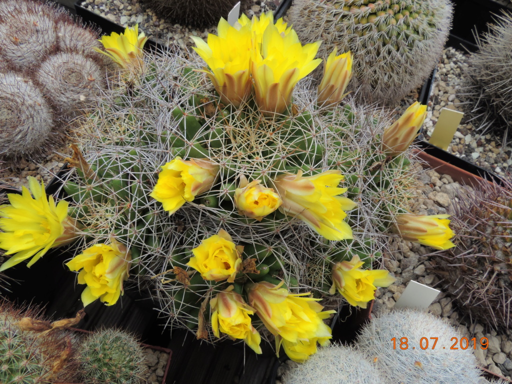 Cacti and Sukkulent in Köln, every day new flowers in the greenhouse Part 220 Bild3827