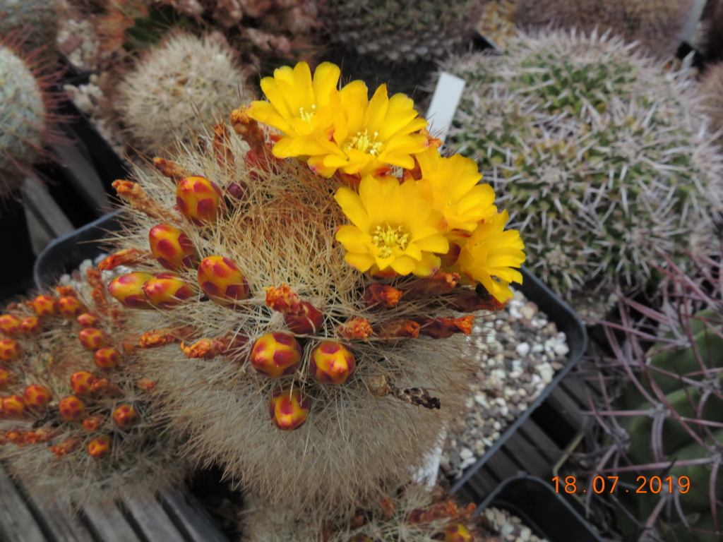 Cacti and Sukkulent in Köln, every day new flowers in the greenhouse Part 220 Bild3828
