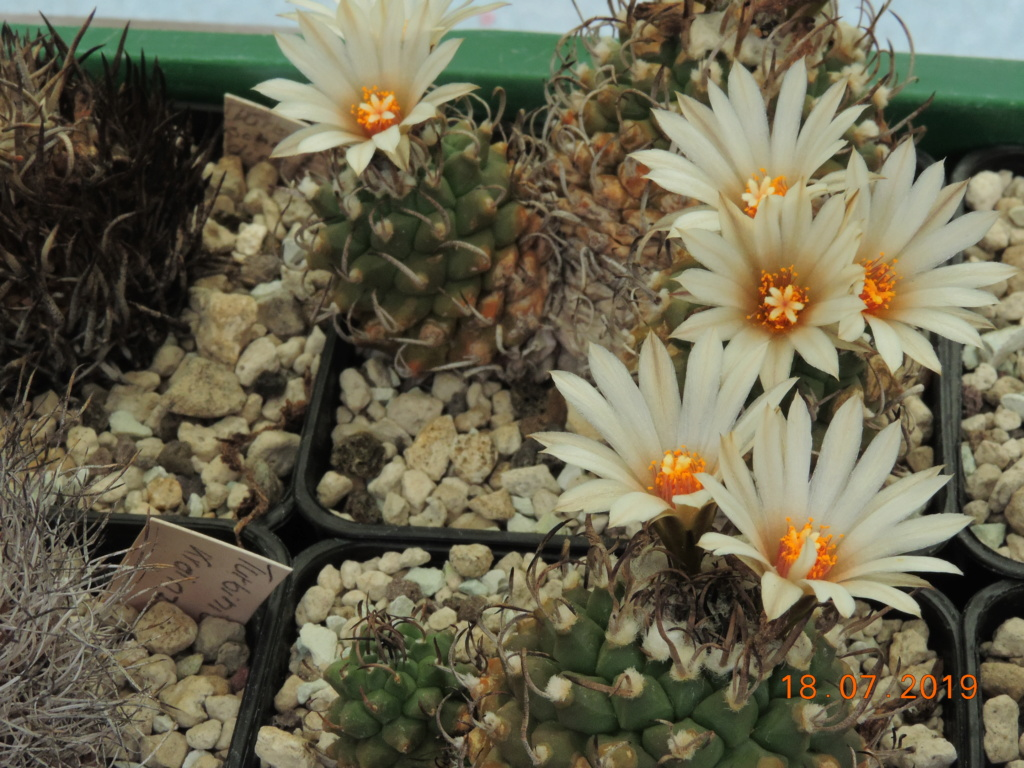 Cacti and Sukkulent in Köln, every day new flowers in the greenhouse Part 220 Bild3831