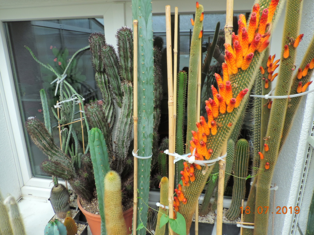 Cacti and Sukkulent in Köln, every day new flowers in the greenhouse Part 220 Bild3841
