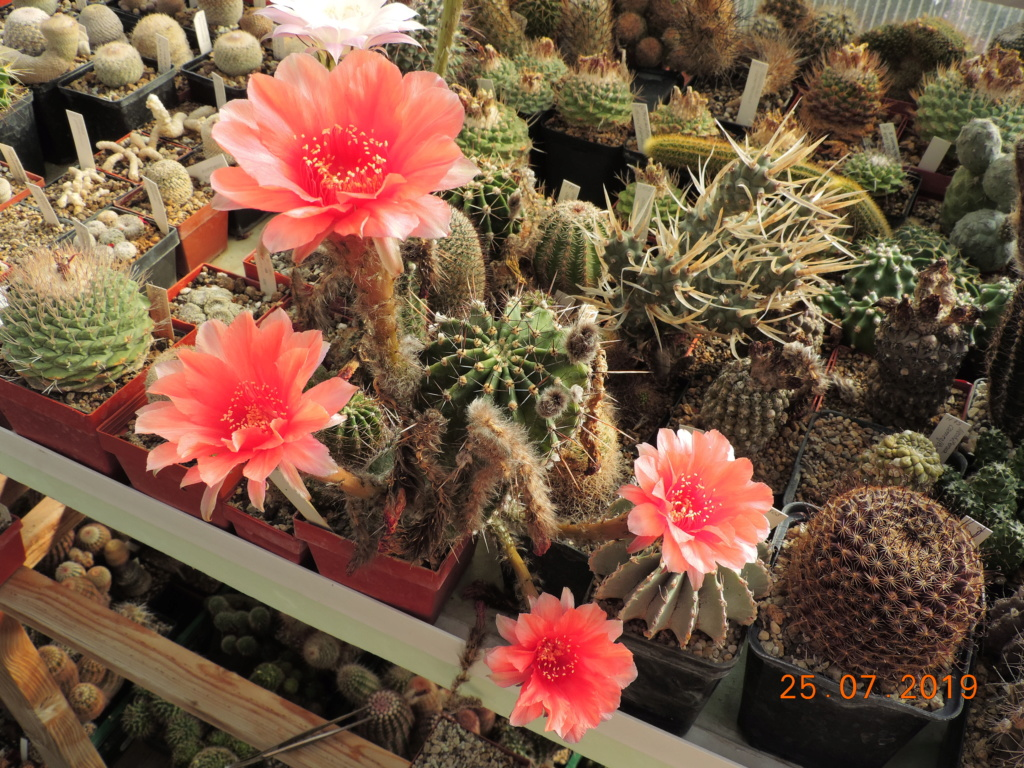 Cacti and Sukkulent in Köln, every day new flowers in the greenhouse Part 220 Bild3860