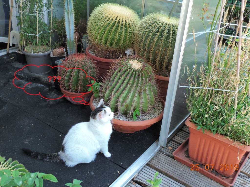 Cacti and Sukkulent in Köln, every day new flowers in the greenhouse Part 220 Bild3866