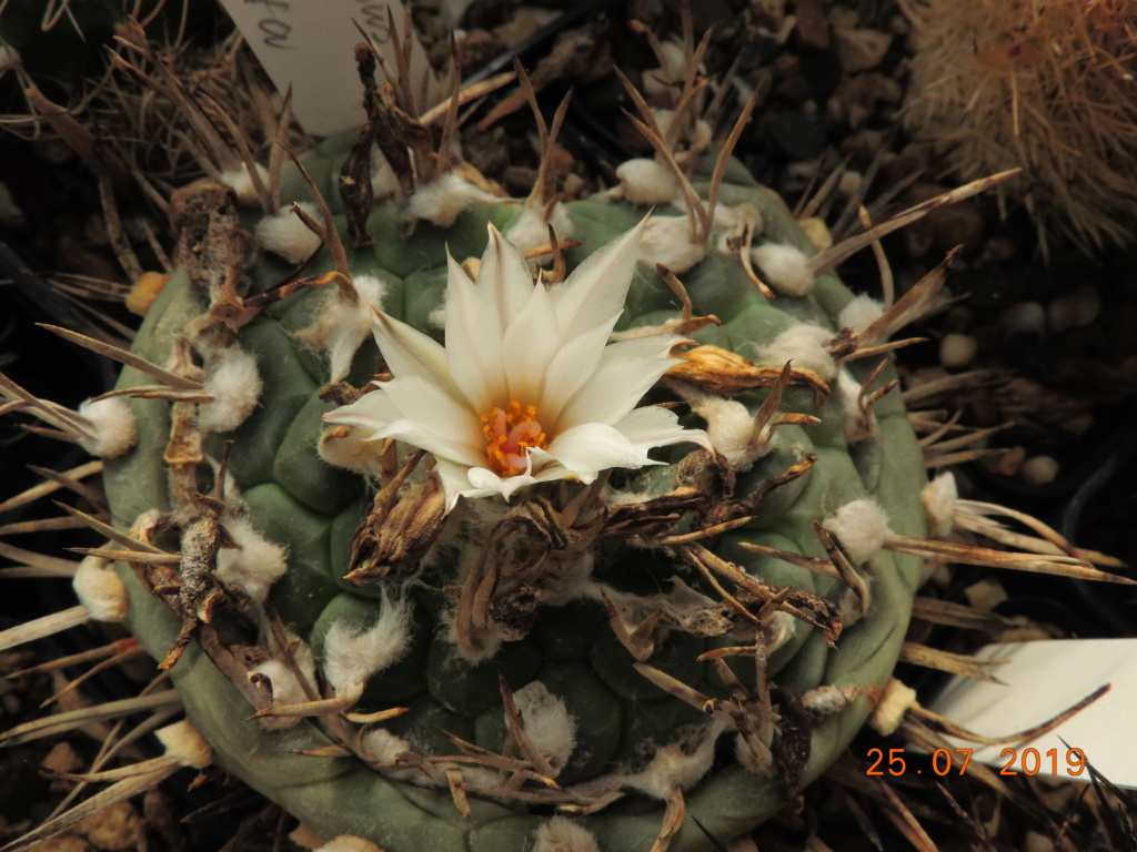 Cacti and Sukkulent in Köln, every day new flowers in the greenhouse Part 220 Bild3871